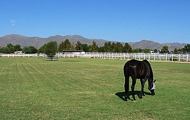 Horse Properties for Sale in Waddell, Arizona